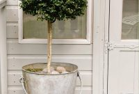 Lemon Grapefruit Trees In Galvanized Bucket In Back Porch Area in size 1047 X 1600